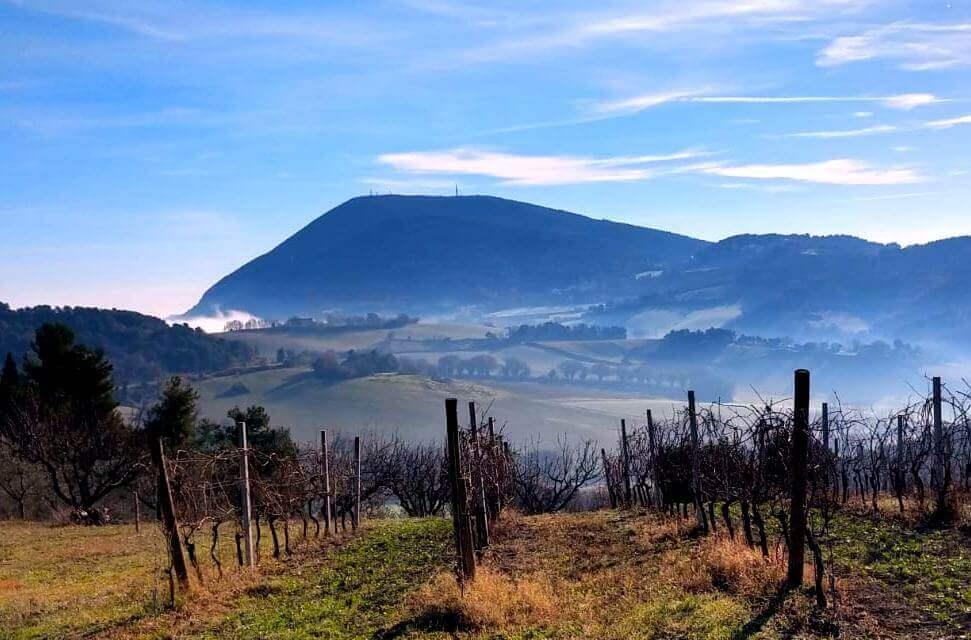 Landscape of monteconero