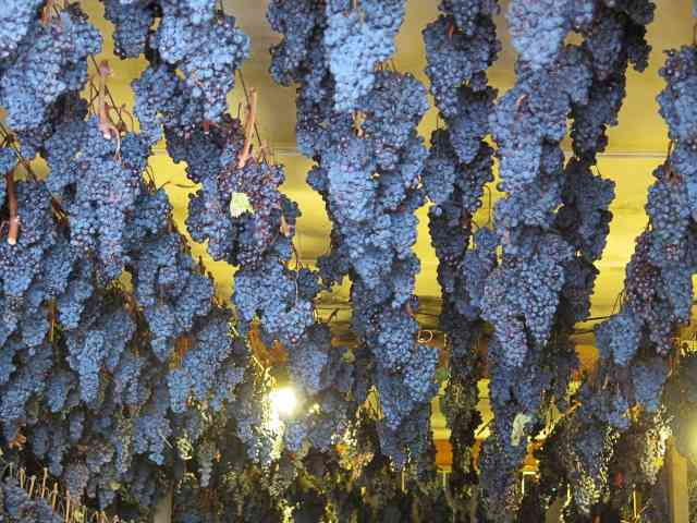 Dried grapes during the appassimenti aperti festival