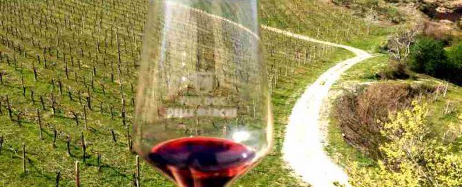 vernaccia di serrapetrona sparkling red wine