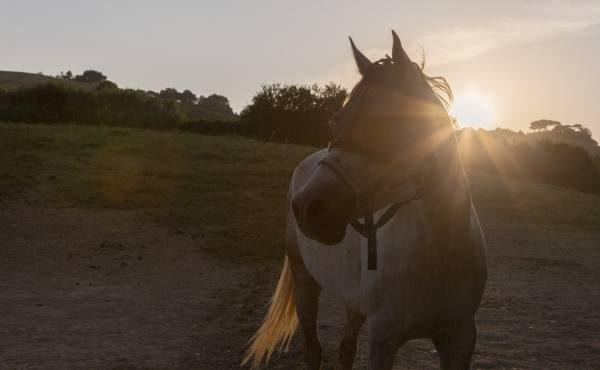 horse riding conero