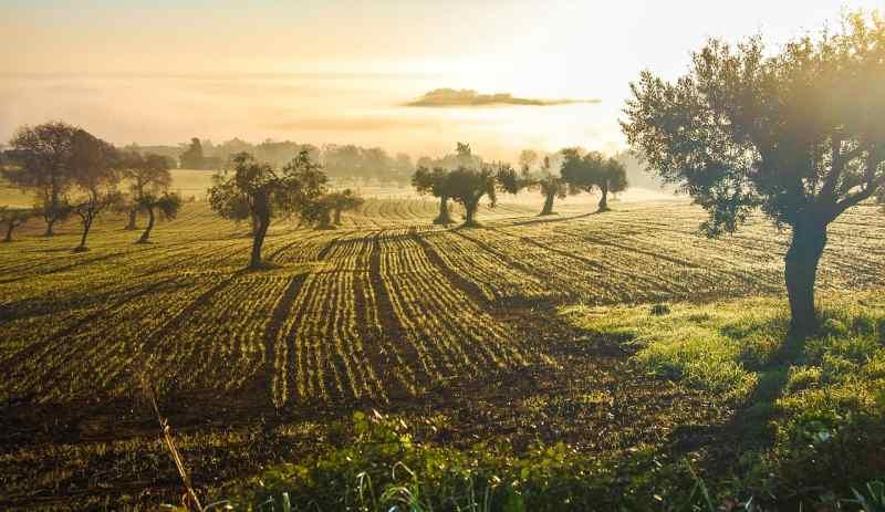 business marche olive oil company